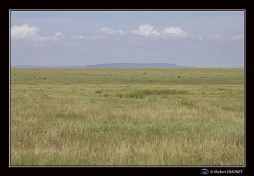 Plaine du Serengeti bis - Cadre Paysage