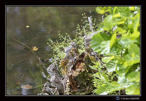 Nature - Cadre Paysage - Les Butineuses 28072021.jpg