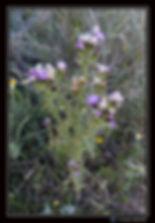 Chardon - Portrait - Canon EOS7DMII+ Sig