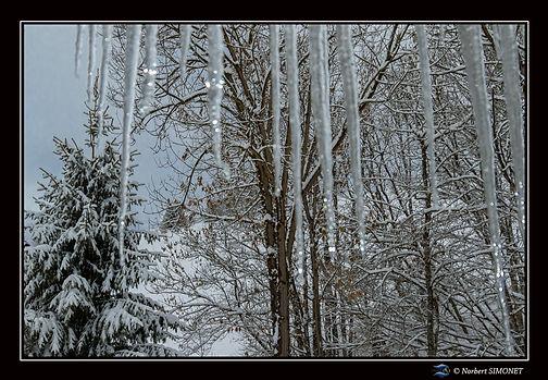 Stalactite et arbres Paysage - 13022019