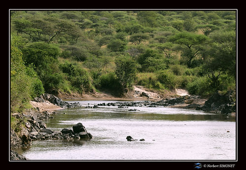 Point d'eau hippopotames 1 - Cadre Paysa