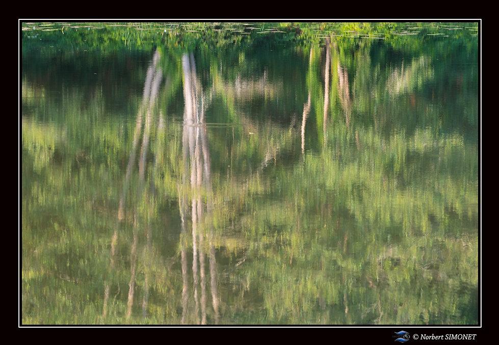 Etang_de_Néal_Reflets_Paysage_-__Plouasn