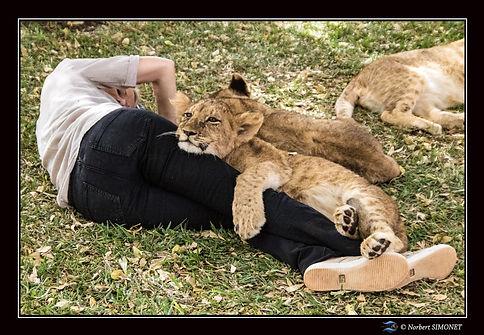 Lionceau  Malak 5 mois mâle câlin sur Pl