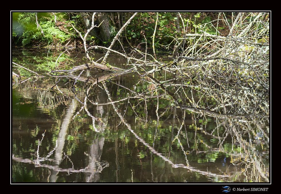 Effet miroir plan d'eau - Cadre Paysage - Les Butineuses 28072021.jpg