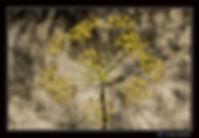 Fleur Bardenas - Paysage - Canon EOS7DMI