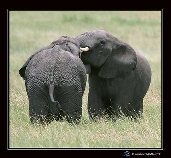 Eléphants_jouent_1_-_Cadre_Carré_-_Ser