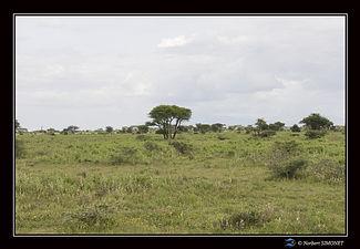Paysages arbres - Cadre Paysage - Plaine