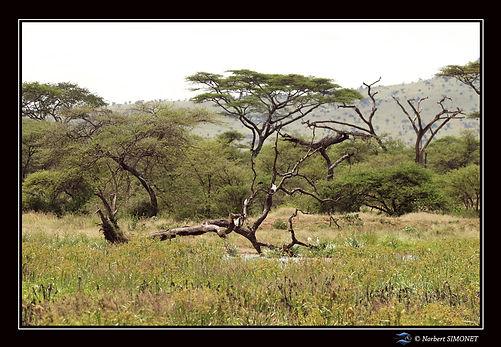 Oiseaux dans le paysage - Cadre Paysage