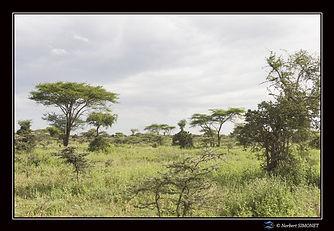 Paysages arbres bis - Cadre Paysage - Pl