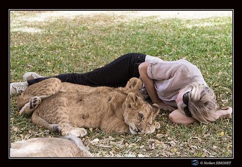Lionceaux Madiba  Malack et Plume sieste