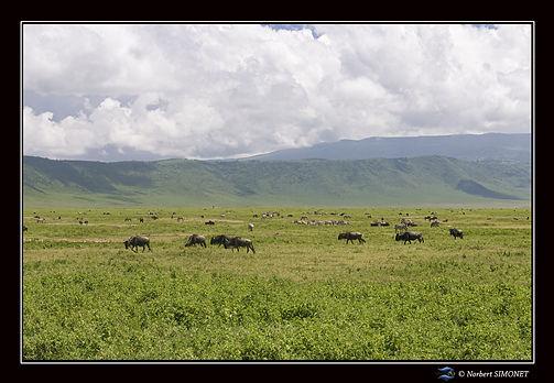 Animaux_dans_le_cratère_du_Ngorongoro_-