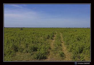 Piste dans la brousse - Cadre Paysage -