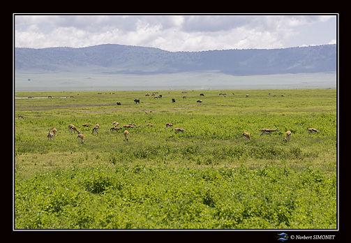 Animaux_dans_le_cratère_du_Ngorongoro_b
