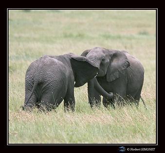 Eléphants_jouent_3_-_Cadre_Carré_-_Ser