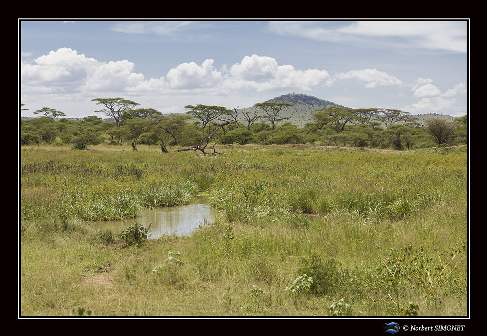 Point d'eau paysage Serengeti - Cadre Pa