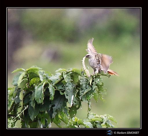 Oiseau_avec_feuille_dans_le_bec_-_Cadre_