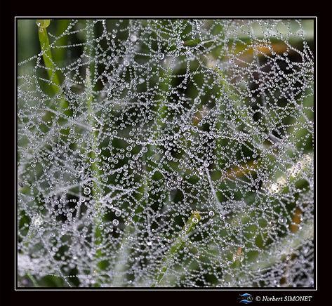 Toile_d'araignée_macro_Carré_-_21022019_