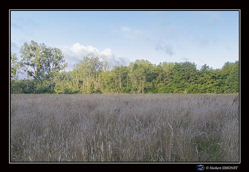 Prairie bis - Cadre Paysage - Les Butineuses 28072021.jpg
