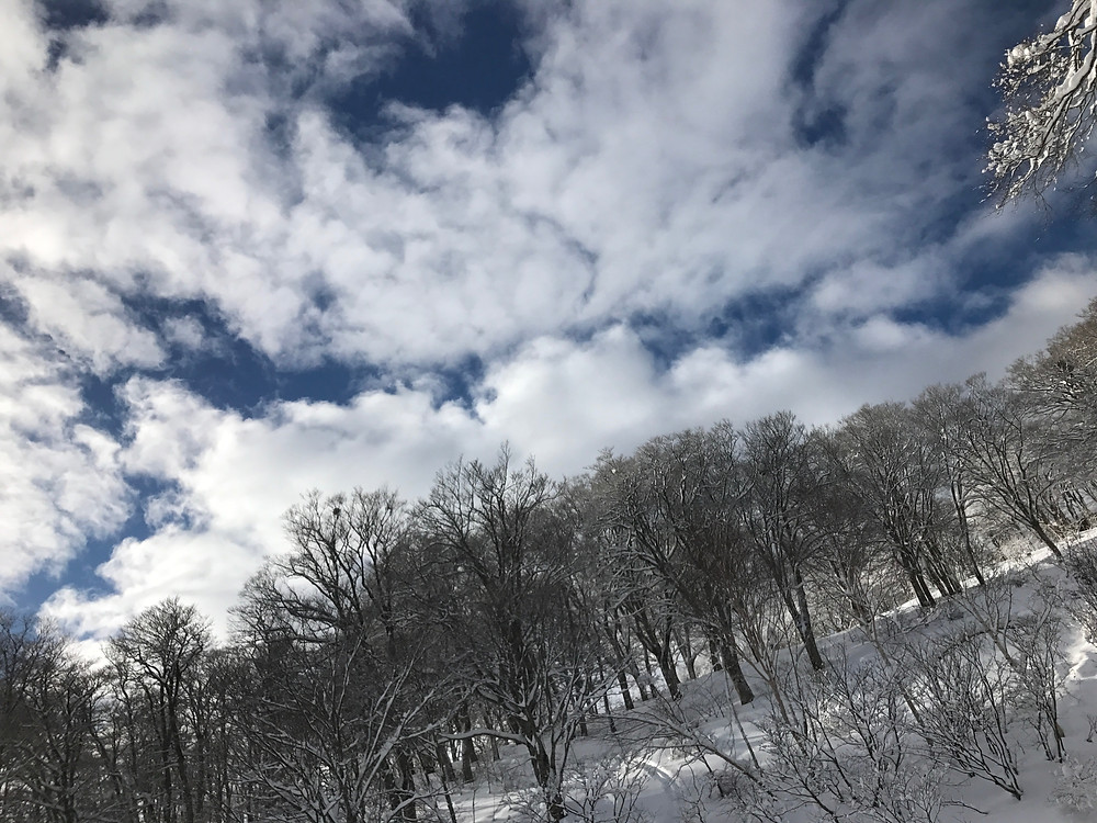 青空と銀世界、最高です❄️🌲❄️   でもこの後、天気が良すぎて雪がどんどん溶けてきてしまうんですけど。。。