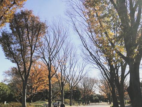 Yoga & Run @駒沢公園