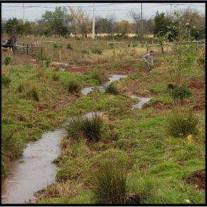 Middlebush Farms Stream Crossing and Buffer
