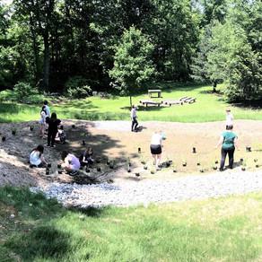 Rain Garden at Hoppock Middle School