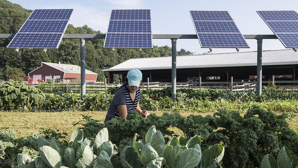 NREL-agrivoltaics-e1602104216842.jpg
