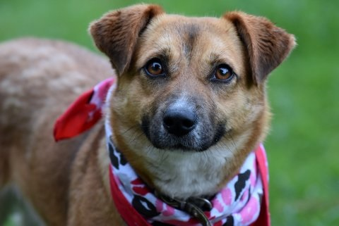 HSEC Pet of the Week: Meet Sandy! Playful, not hyper, crate