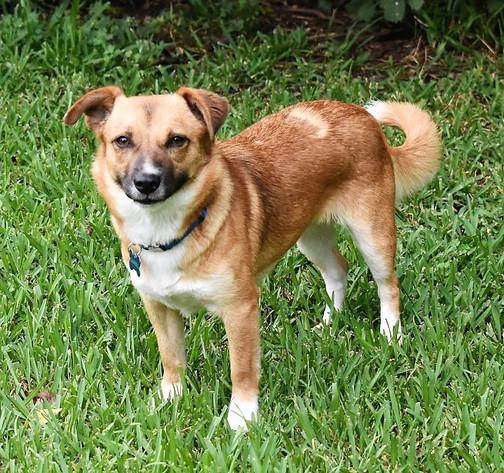 HSEC Pet of the Week: Meet Sandy! Playful, not hyper, crate