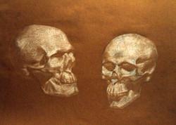6 мес. обучения. Гипсовые черепа
