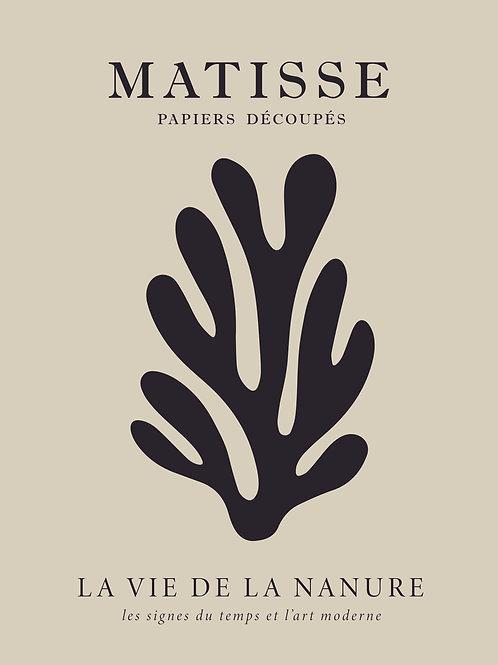 Matisse No7