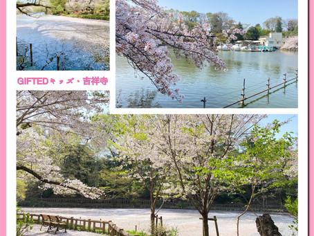 桜の絨毯(じゅうたん)