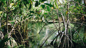 Nature-based solutions: What are mangrove forests and why do we need them?