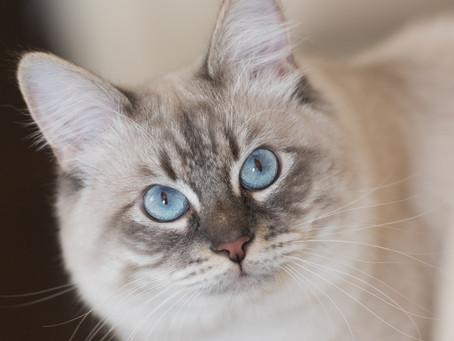 Кошачьи истории. История 1
