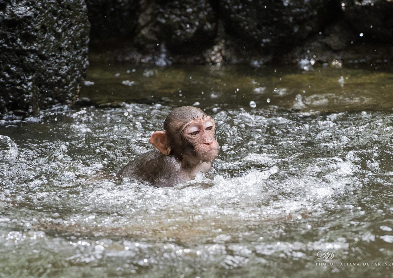 Остров обезьян. Китай. Хайнань