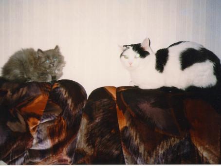 Кошачьи истории. История 3