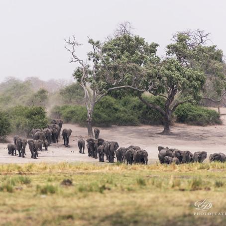 Не ходите дети в Африку гулять
