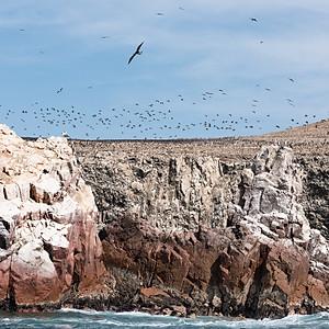 Паракас. Острова Байестас Перу часть 3