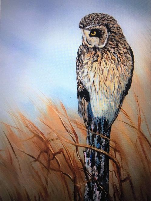 Short-Eared Owl, II