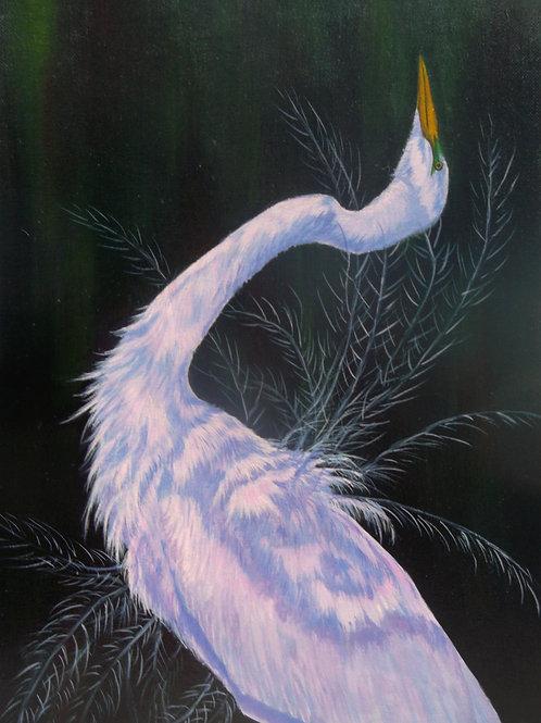 Mating Display - Great Egret