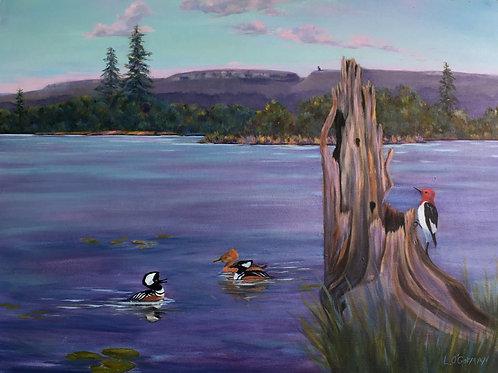 Shawangunk Ridge, NY - Hooded Mergansers & Red Headed Woodpecker