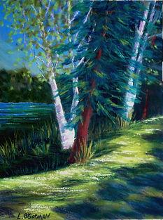Birches-Aroostock SP, Maine Pastel 9x12