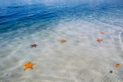 starfishies