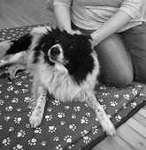 Shiatsu Bodyworks - Cheltenham - Canine Arthritis, Anxiety and Allergy relief
