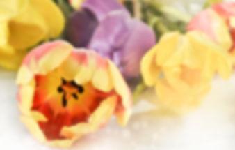 flower-nature-tulip-color-desktop-bright