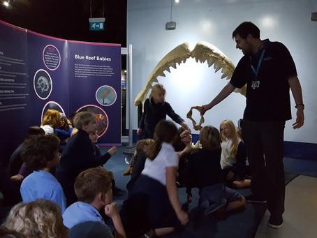 Whole School Trip to Bristol Aquarium