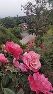 Hilltop Roses.jpg