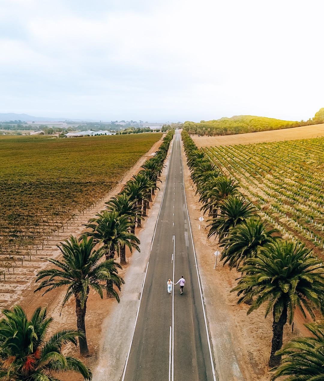 Seppeltsfield Road Barossa Valley South Australia