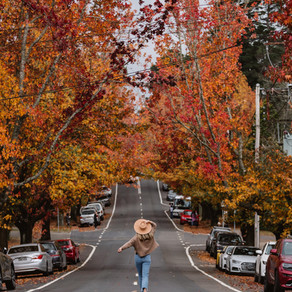 Autumn Around Sydney-Where to Find the Prettiest Autumn Colors