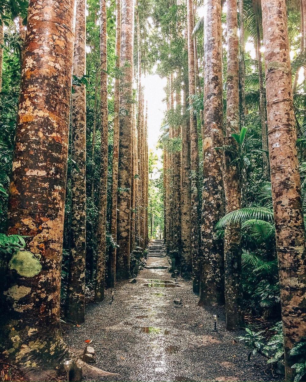 Paronella Park Tropical North Queensland